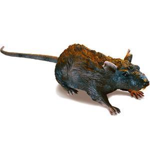 Radio Control Rat